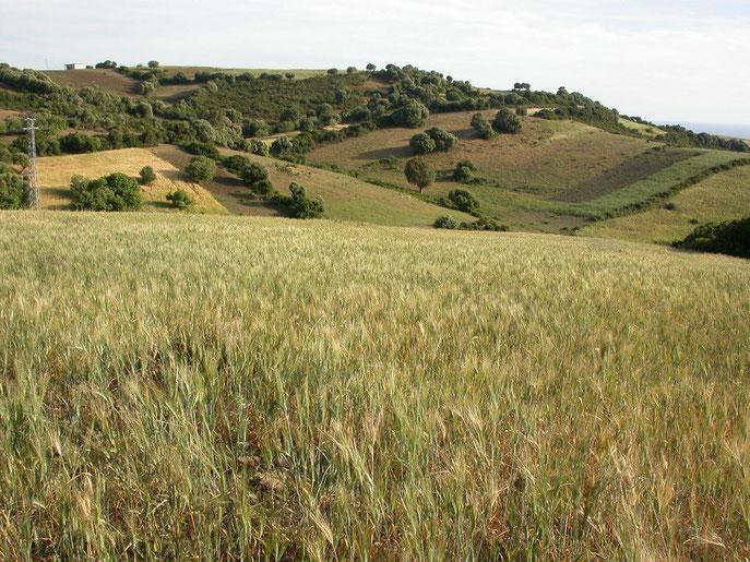 2005 : à l'origine, un champ de blé