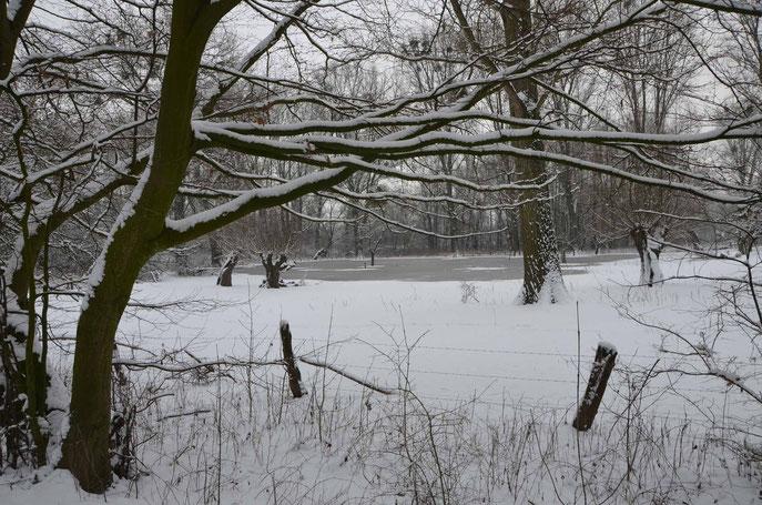 Urdenbacher Kämpe im Schnee
