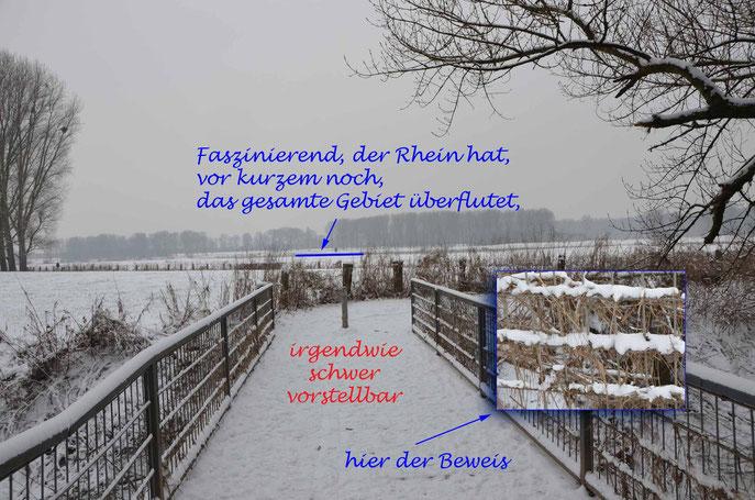 am Rheinufer nach einem Hochwasser