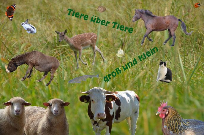 Collage mit Tieren