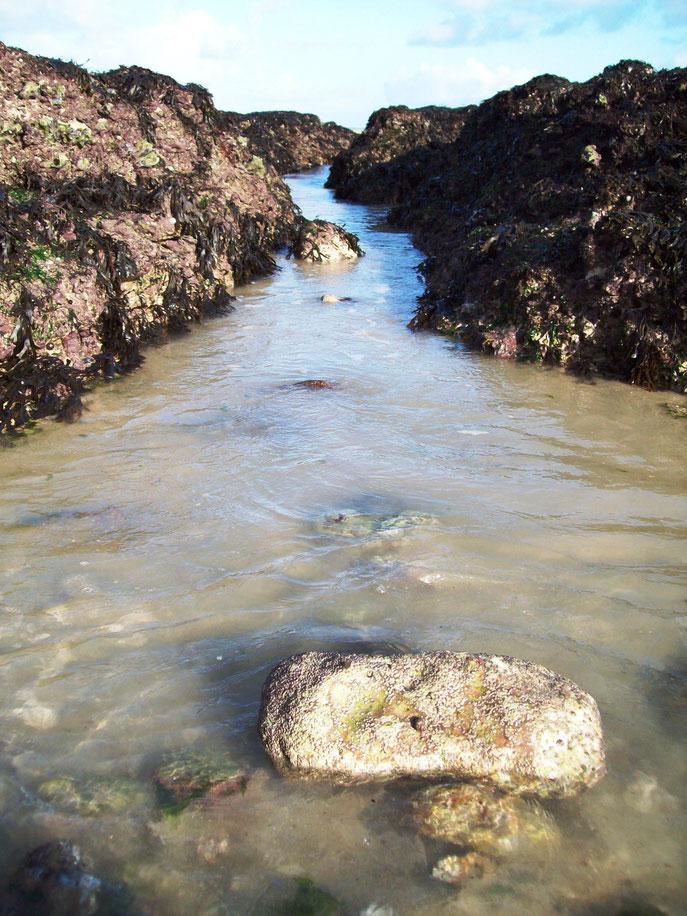 """Das Wasser sucht sich seinen Weg - Die Natur ist eine wichtige Inspirationsquelle für unsere Arbeit. Hier: """"Der Lauf des Wassers""""/ Moderne Wandbilder 2013"""