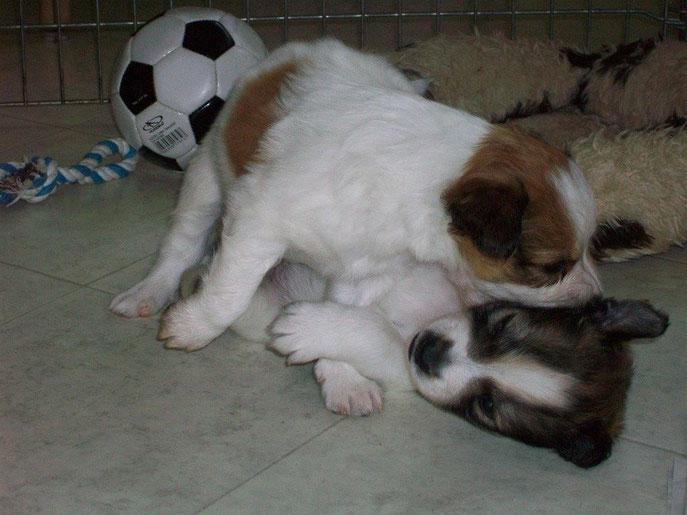 Fußball-Pause, komm lass uns kämpfen (Damiro=hell und Dario)
