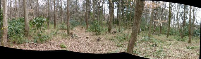雑木林パノラマ