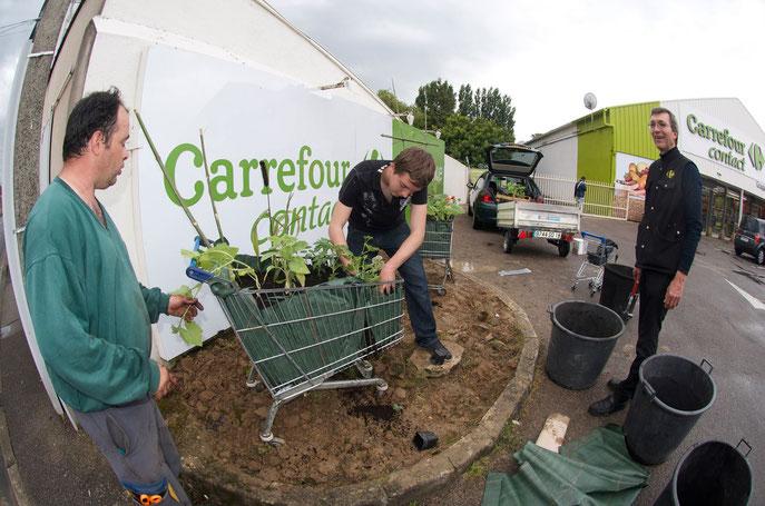 Les caddys de terre à Carrefour pour y planter des graines de toutes sortes, haricots grimpants, citrouilles, etc...