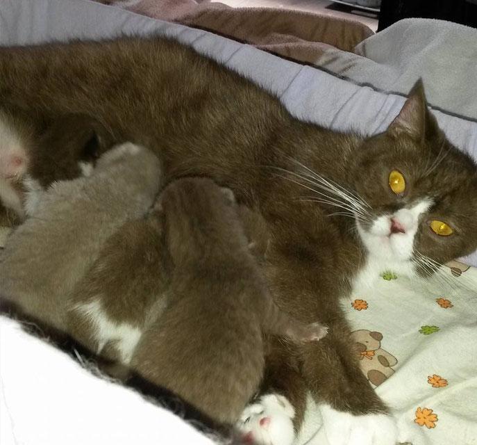 5 chatons (1 femelle en option, 4 mâles disponibles)