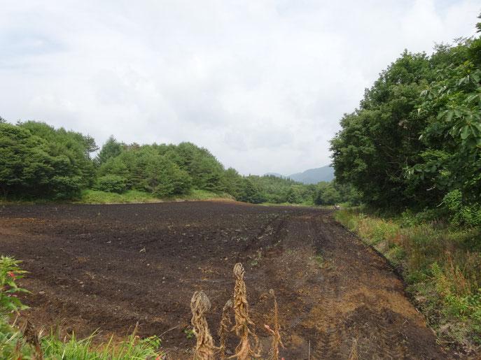 プラウ耕も終わった播種前の畑 排水を考慮してロータリーでの砕土均平はしない