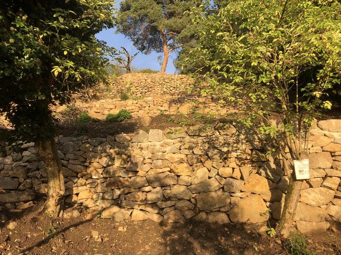 Trockenmauern sind wichtige Lebensräume - müssen dafür aber freigehalten werden. Manchmal hilft dann nur noch der Wiederaufbau.