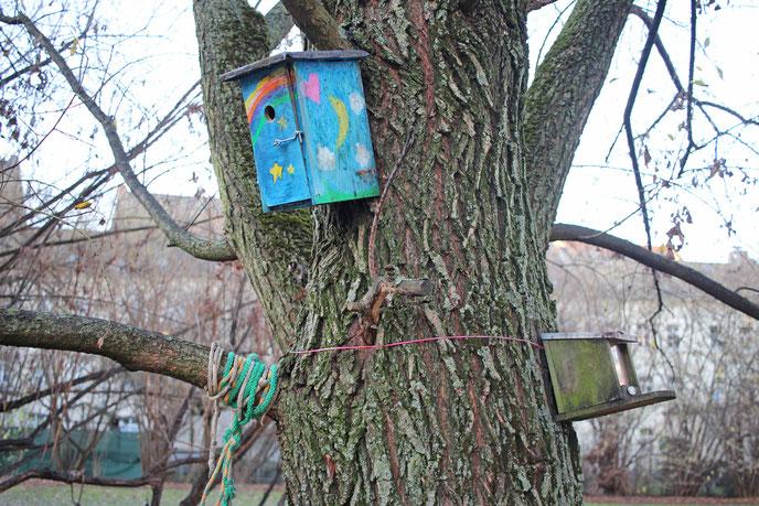 Ein Baum mit selbstgebauten Brutkästen im Außengelände der Kita.