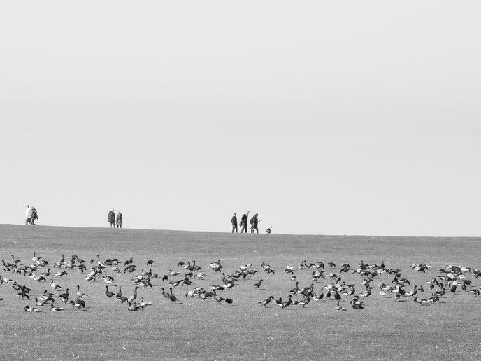 sunday walk, Deich, Gänse, Spazieren gehen, monocrom, black and white, schwarz-weiss, Nordsee, Norden,  zusammensein, togetherness, Schwarzweissfotografie, kreative Fotografie, Fototipps