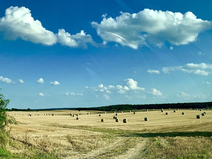 Direkt hinter dem Haus - Stoppelfeld im Sommer, Grenze zu Mecklenburg-Vorpommern