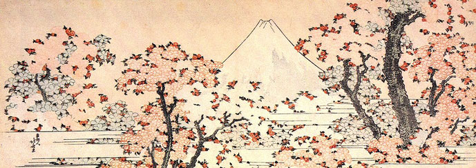 Cherry blossom and Mt. Fuji  Source: wikipedia