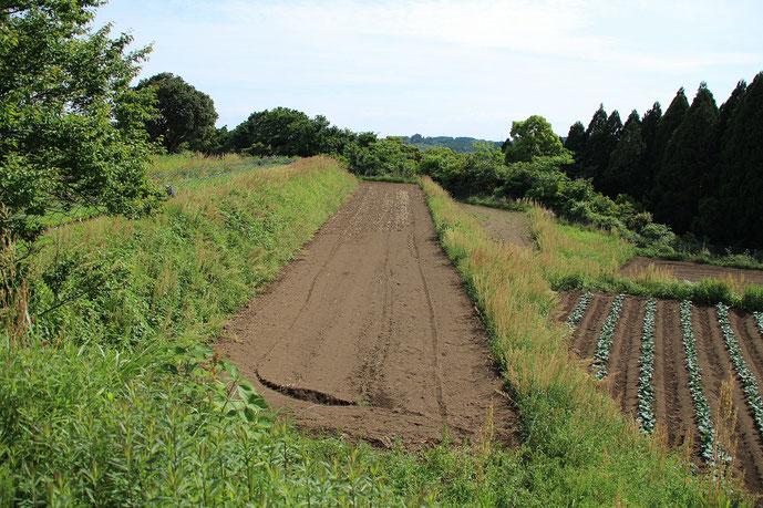 綾町尾立地区の段差のある畑の写真