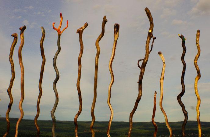 Wanderstäbe aus Holz im Wald
