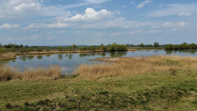 Es gibt jede Menge Seen im Donaumoos...