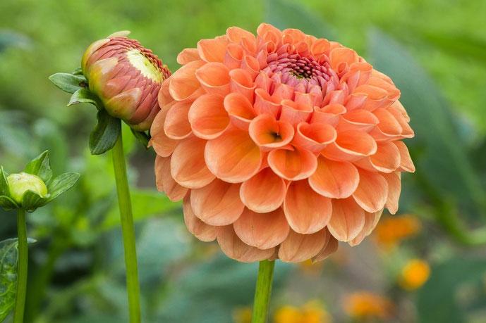 Lieber glücklich mit Dankbarkeit, dauerhaft schlank, Demut, Denken und Duft