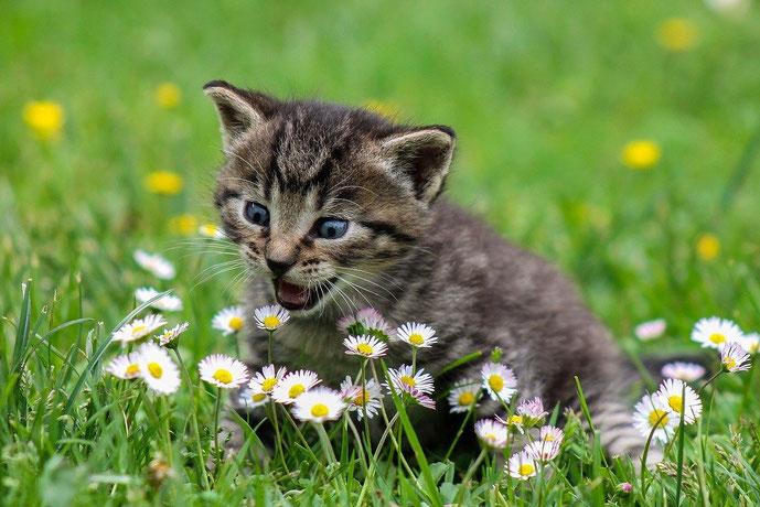 Blogreihe mit Gastbeiträgen zu Tierstimmung, Tierkommunikation und Transformation #lieberglücklich #Blog #Glück #glücklich