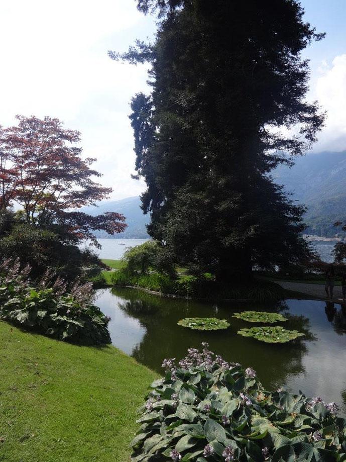 Teich mit Seerosen am Comer See Park Villa Melzi