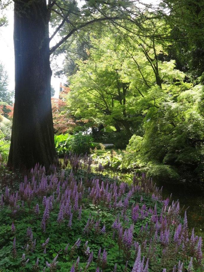 Bach im Wald Villa Melzo Park Comer See