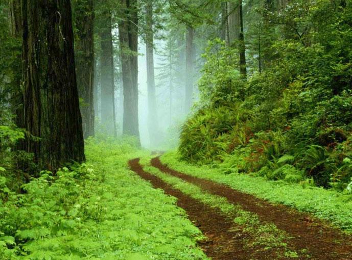 SENDERO DEL AMOR -  camino espiritual de la llenura del amor de Dios dentro de cada uno de nosotros-PROSPERIDAD UNIVERSAL