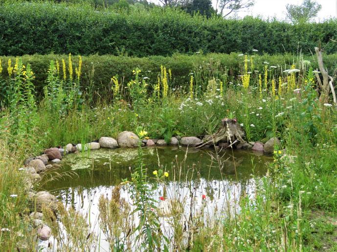 Mücken im fischfreien Teich - Wo sind sie?