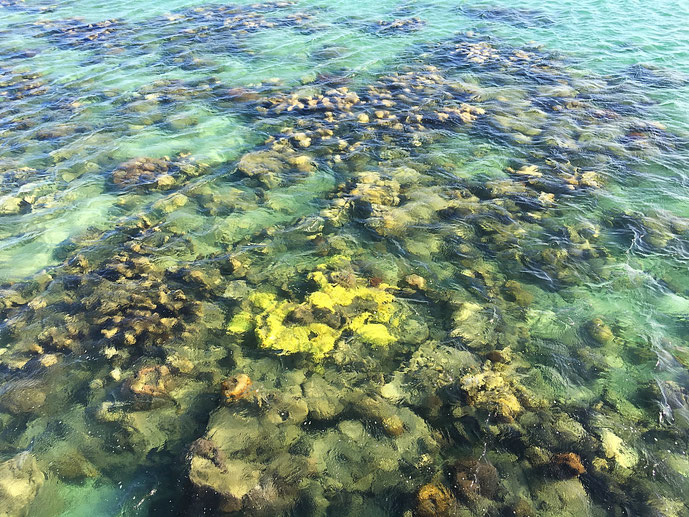 Korallenriff bei Green Island