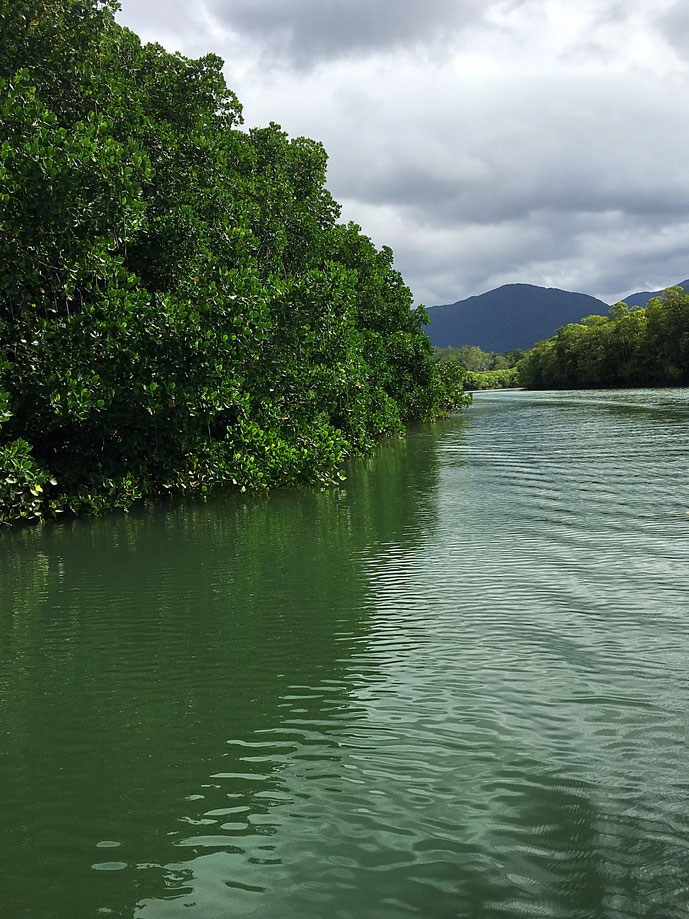 Daintree Fluss