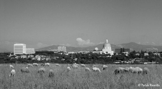 Borgata del Trullo, Montecucco. Sullo sfondo l'EUR. Tutti i diritti riservati