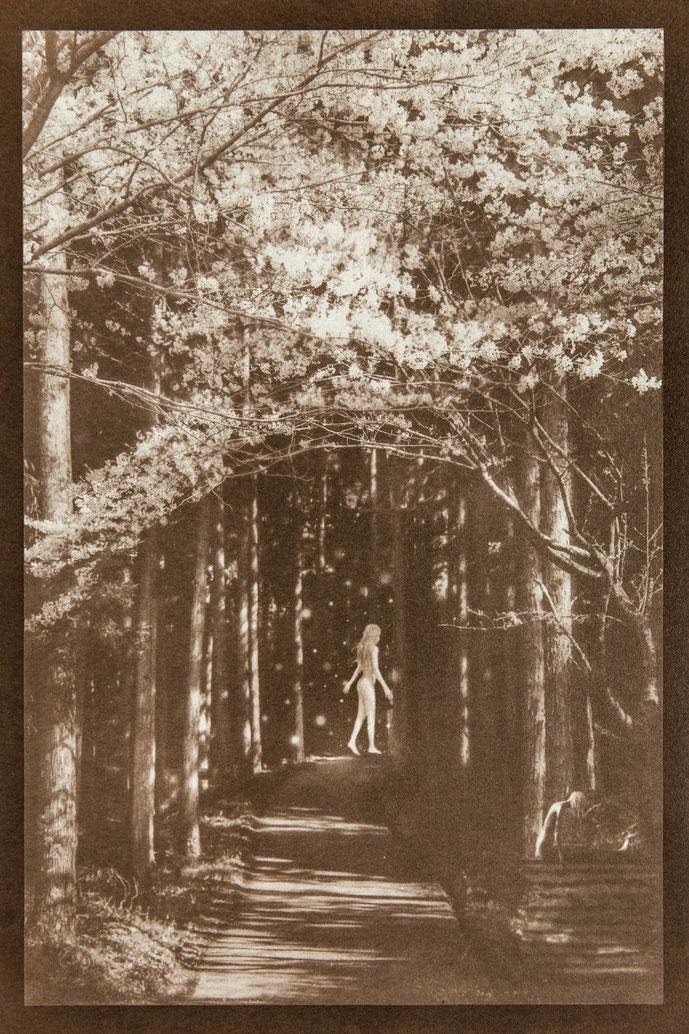 無花果花影『はらわた違い』  - PHOTO WORK - 氷森記心 - KISHIN HIMORI -