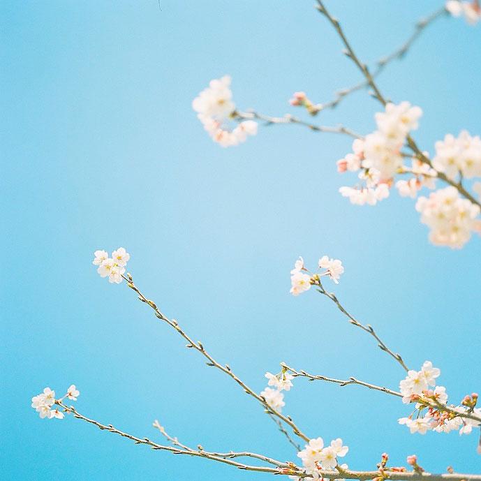 晴天の空と桜