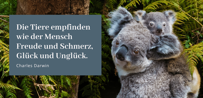 """""""Tierisch glücklich"""" mit Tierstimmung, Stefanie Rénou schreibt über Tierkommunikation im Gastbeitrag #Blog #Tiere #Tierkommunikation #lieberglücklich #glücklich"""