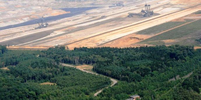 """Den århundrede gamle skov """"Hambacher Forst"""""""