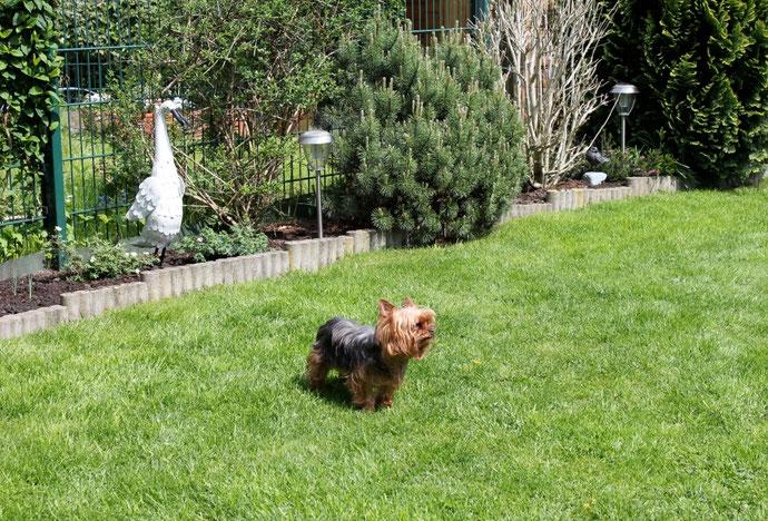 Lana ist zwar klein, aber ein grimmiger Wachhund ;-)