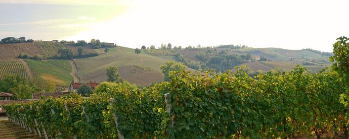 イタリアワイン醸造家