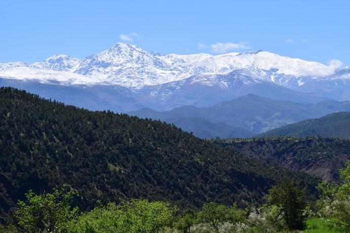 Piémont méridional du Djebel Toubkal (Ourika), localité de A. belia belia trans-androgyne, Haut Atlas central, 2018, ©Frédérique Courtin-Tarrier