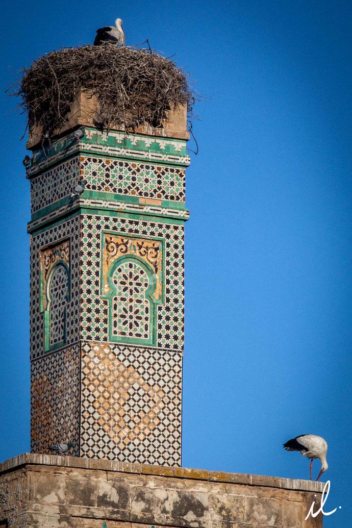 Les cigognes du Chellah, Rabat Isaure Lambert
