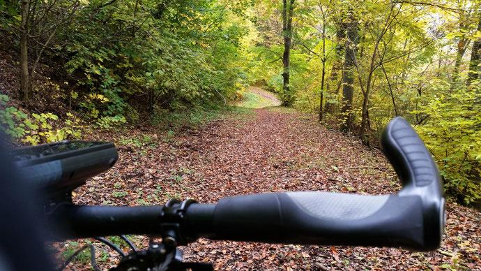 Herbst - wie raschelt es doch so herrlich auf dem Blätterweg...