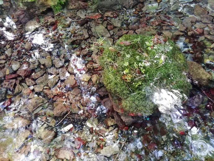 上西条神社・一の池