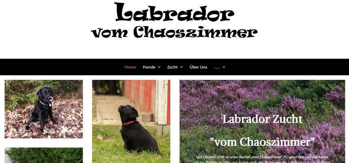Labrador vom Chaoszimmer