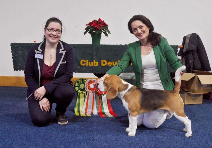 Bagio Boss Gintarine Fortuna * Lord James *, Czarnowsky , Beagle, Beagle, Beagle, Beagle, Beagle, Champions