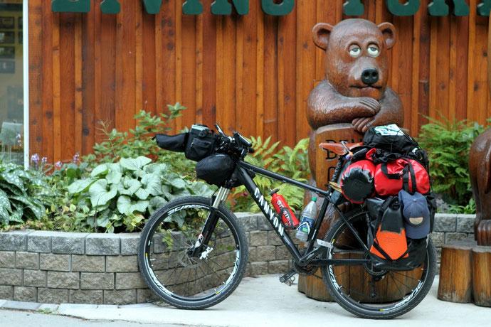 Begegnungen von Bär und Fahrrad kommen bei einer Radreise schon mal vor.