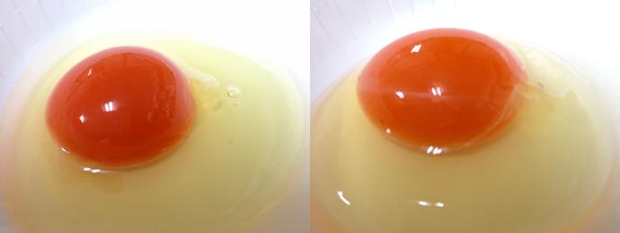 萌味たまご(左)と金印たまご(右)写真だと分かりにくいですが、 色も赤の深みも全然違います!