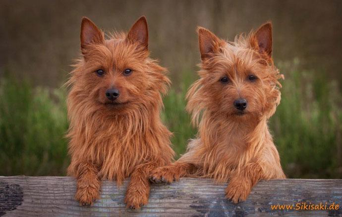 Hund, Tierfotografie, Hundefotografie, Bremen, Oldenburg, Tierfotografin,Hundebilder, Welpenfotos, Welpenbilder, Fotoshooting
