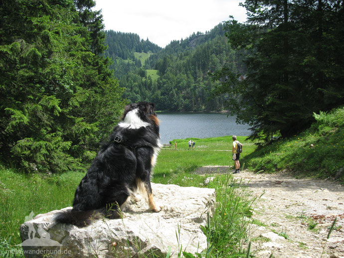 Mit Hund am Wasser wandern: Taubensee im Chiemgau