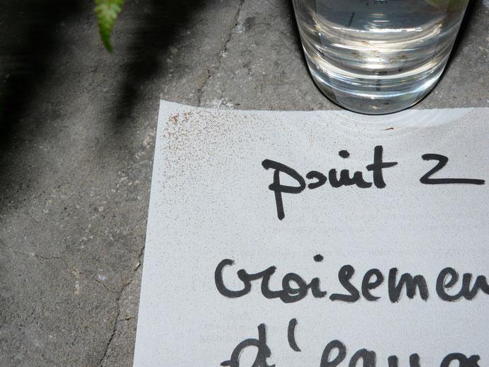 libération de spores de fougères en présence de cours d'eau souterrain