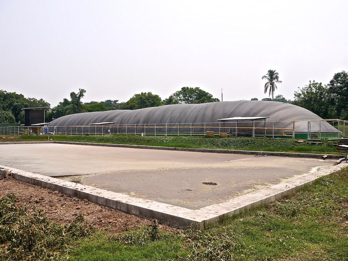 Covered lagoon digester for dairy cattle manure