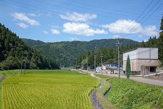 8月田んぼ風景