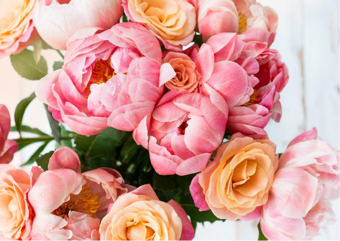Blumengeschenke, Welche Blumen zum Muttertag, welche blumen mögen Frauen, was für Blumen schenken, verschenken , Geschenk, Muttertagsblumen, Überraschung, wie kann ich meiner Freundin eine Freude machen,  so richtig überraschen, romantisch, Ehefrau , Mama