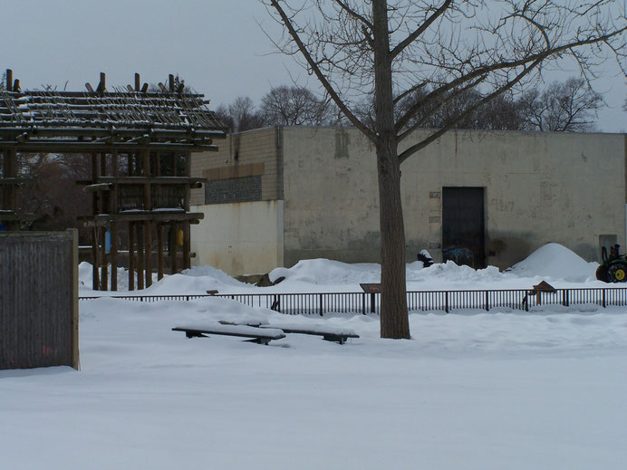 Buttonwood Park Zoo elephant exhibit, March 3, 2015. Picnic table tops in foreground.