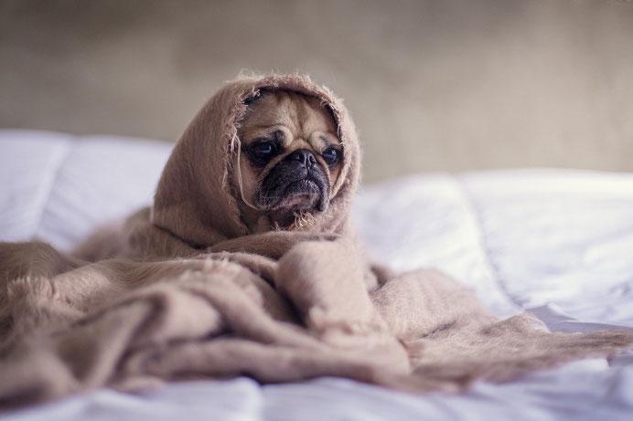 Hunde, Hundeschuhe, Zahnstein hund, Zahnstein, Zahnstein entfernen, Hundespielzeug, Flexileine