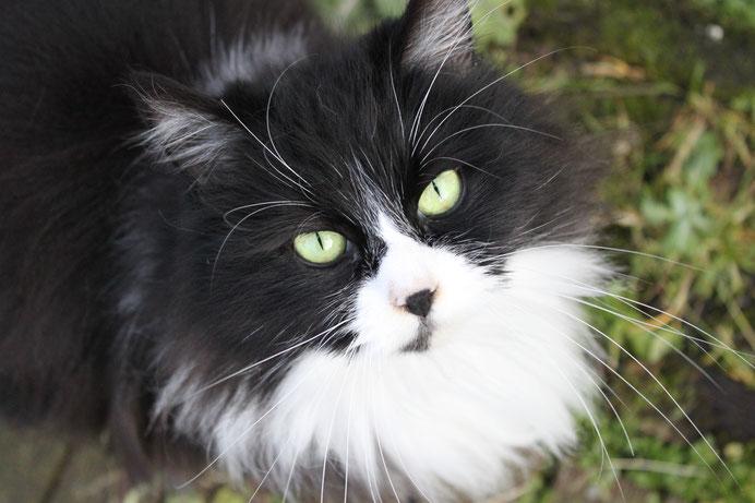 proposer votre candidature et accueillir un chat chez vous site de kotchka. Black Bedroom Furniture Sets. Home Design Ideas